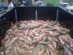 pic of cabins and bowfishing tournament 016.jpg